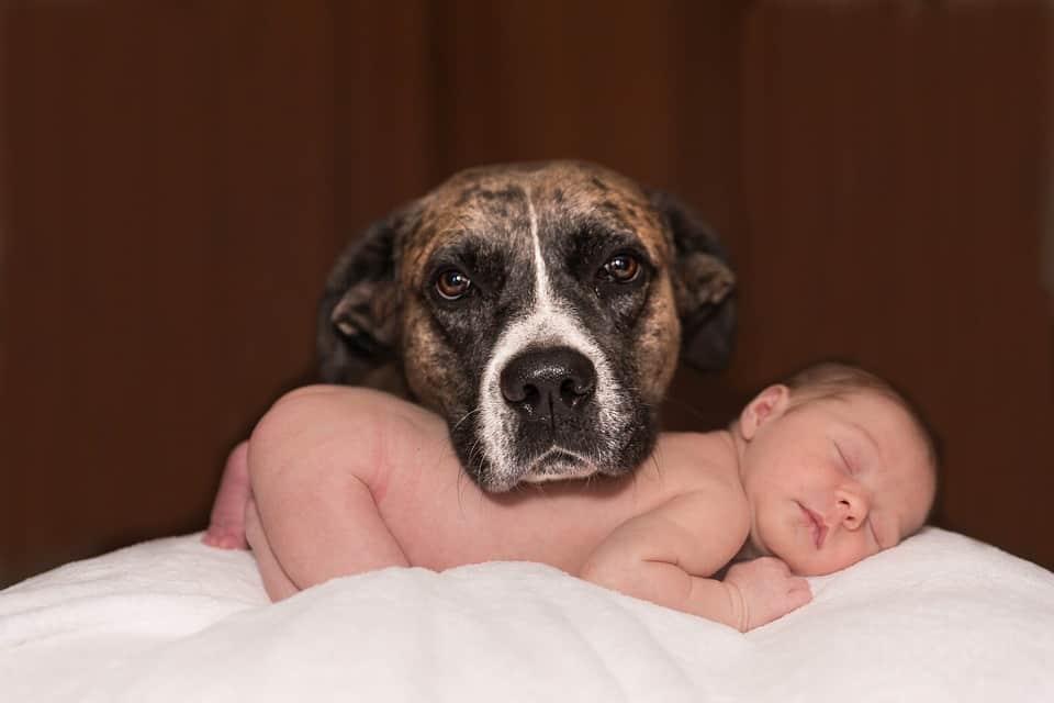 Animaux de compagnie et bébé : les choses à savoir
